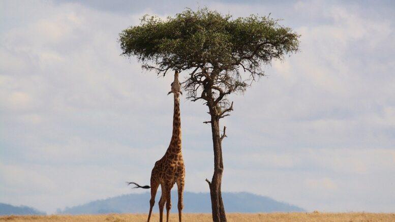 viaggio alla scoperta dell'africa