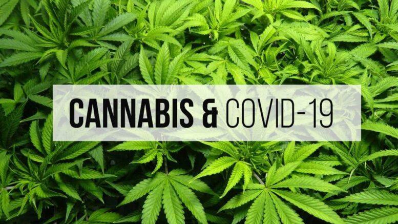 marijuana-covid